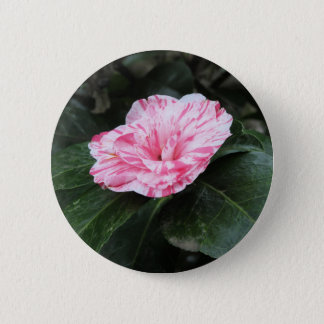 Single red streaked white flower Camellia japonica 6 Cm Round Badge
