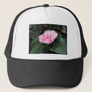Single red streaked white flower Camellia japonica Trucker Hat