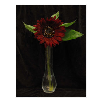 Single Red Sunflower Postcard