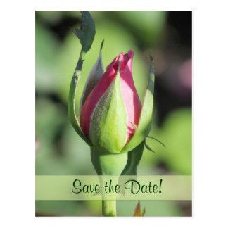 Single Rose Bud Save the Date Postcards