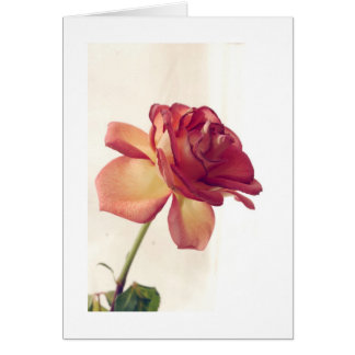 single rose edited 2, Happy Valentines Day Greeting Card