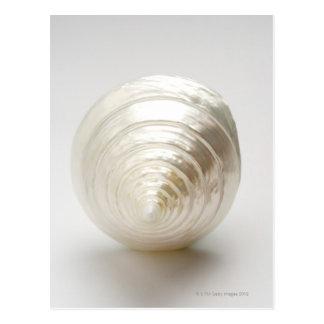 Single spiral seashell postcard