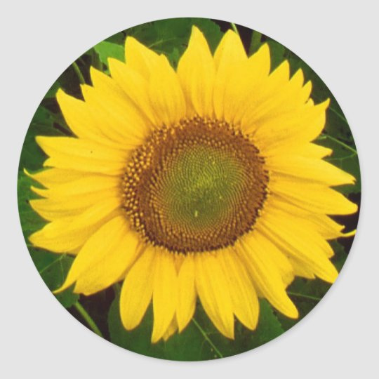 Single Sunflower Green Leaves Yellow Flower Round Sticker