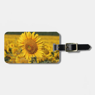 Single Sunflower in a Field of Sunflowers Luggage Tag