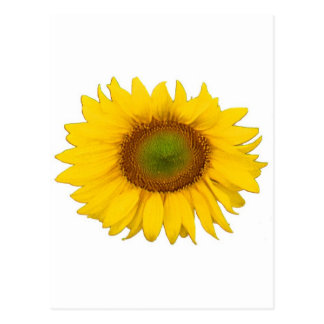 Single Sunflower Yellow Flower Flowers Postcard