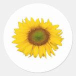 Single Sunflower Yellow Flower Flowers Stickers