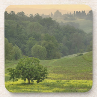 Single tree in agricultural farm field, Tuscany, Drink Coaster