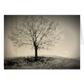 Single Tree in Dreamland Note Card