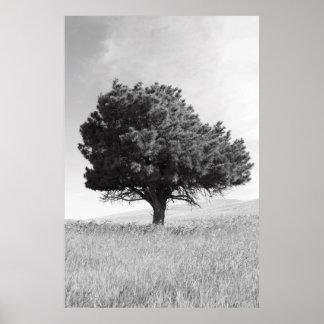 Single Tree Poster,Print Poster