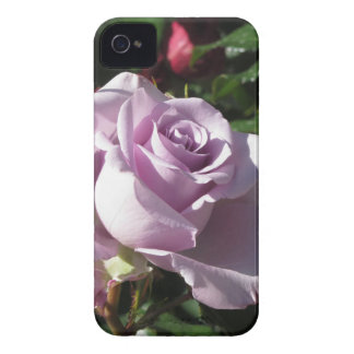 Single violet rose flower with red roses around iPhone 4 cases