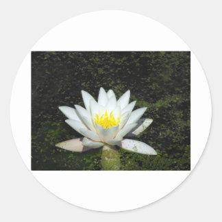 Single Water Lily on Dark Water Round Sticker