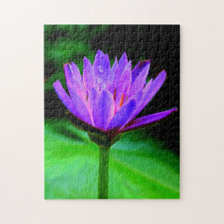 Single Water Lily Puzzles