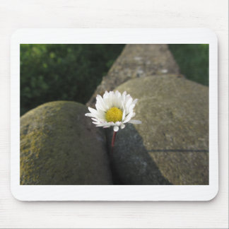 Single white daisy flower between the stones mouse pad
