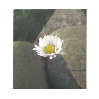 Single white daisy flower between the stones notepad