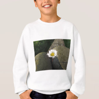 Single white daisy flower between the stones sweatshirt