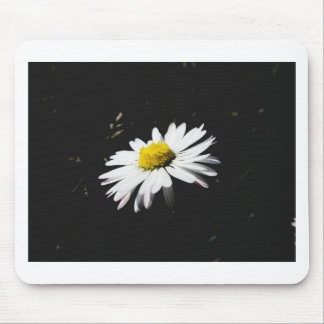 Single white daisy flower on dark background mouse pad
