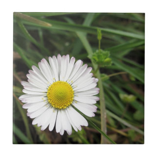 Single white daisy flower on green background small square tile