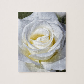 Single white rose blossoms jigsaw puzzle