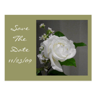 Single White Rose Save the Date Postcard