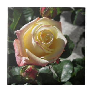 Single yellow rose flower in spring ceramic tile