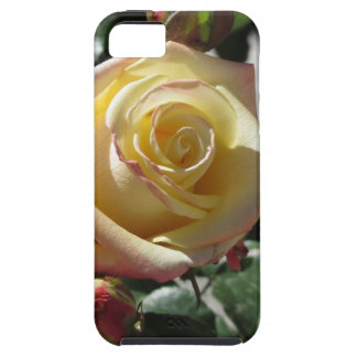 Single yellow rose flower in spring tough iPhone 5 case