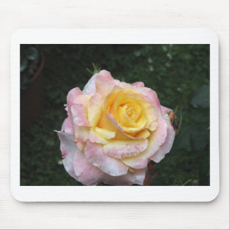 Single yellow rose flower with water droplets mouse pad