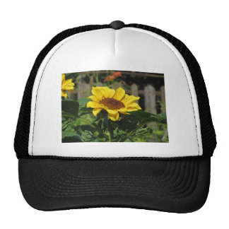 Single yellow sunflower with green leaves cap