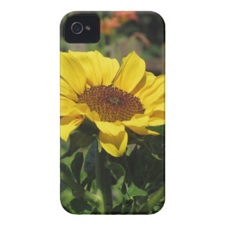Single yellow sunflower with green leaves iPhone 4 cover