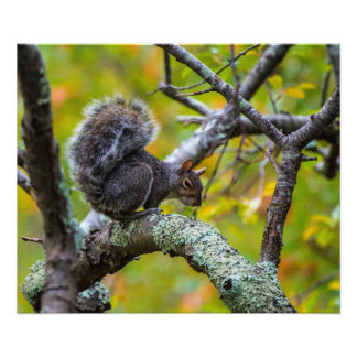 Sinister Squirrel 24  x 20 Kodak Pro Photo Paper