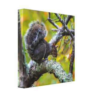 SINISTER SQUIRREL WRAPPED CANVAS PRINT