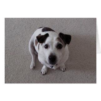 Sit Dog Card