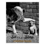Sit- - - Stay - - - Poster