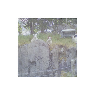 Siting and standing sheep stone magnet