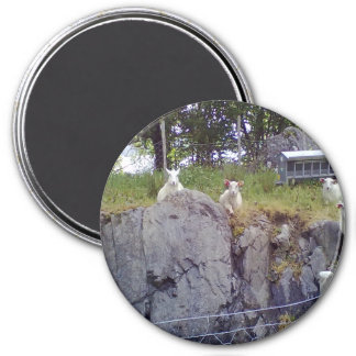 Siting and standing Sheep Magnets