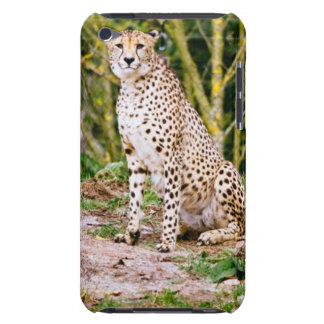 Sitting Cheetah Portrait Barely There iPod Covers