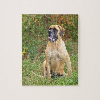 Sitting English Mastiff dog puzzle