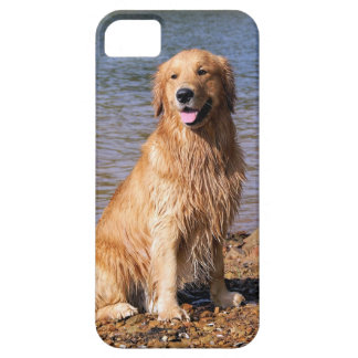 Sitting Golden Retriever iphone 5 Case