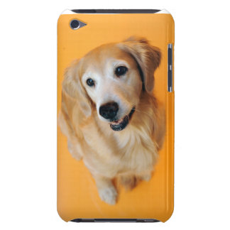 Sitting Pretty Golden iPod Touch Case