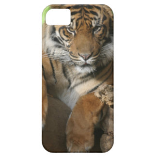 Sitting Pretty iPhone 5 Covers