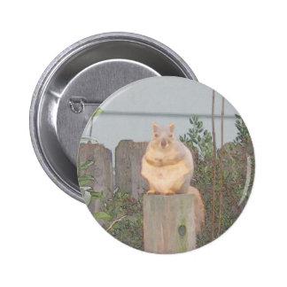Sitting Squirrel Pins