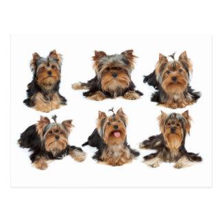 Six dogs postcard