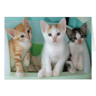 Six Week Old Kittens being Cute Card