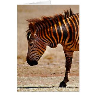 Sizzling zebra greeting card