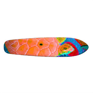 Skateboarding Turtle Tortoise Skateboard