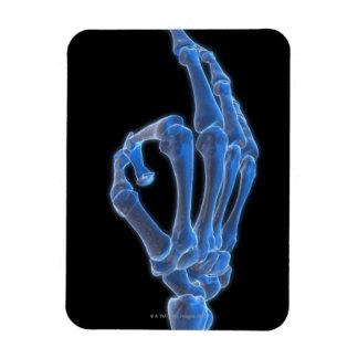 Skeletal Hand Gesture Magnet