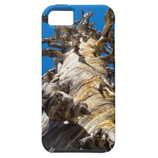 Skeletal Tree with Blue Sky iPhone 5 Cases
