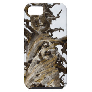 Skeletal Tree with Clouds iPhone 5 Cover