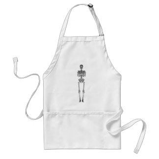 Skeleton 3d Model: Standard Apron
