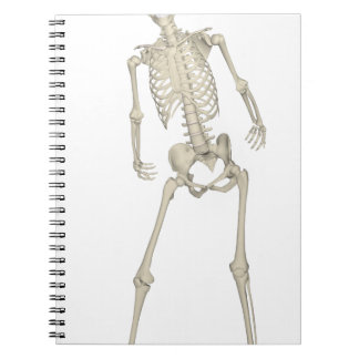 Skeleton #7 notebooks