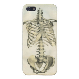Skeleton Anatomical Art Case For iPhone 5/5S